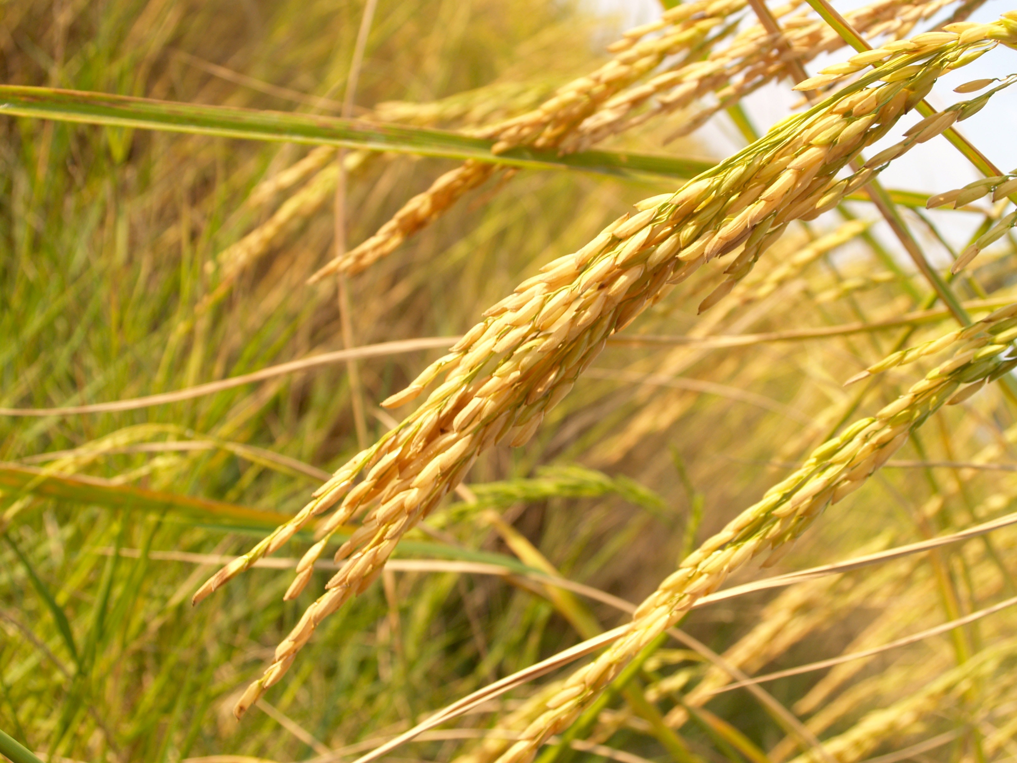 agriculture-blur-close-up-162992