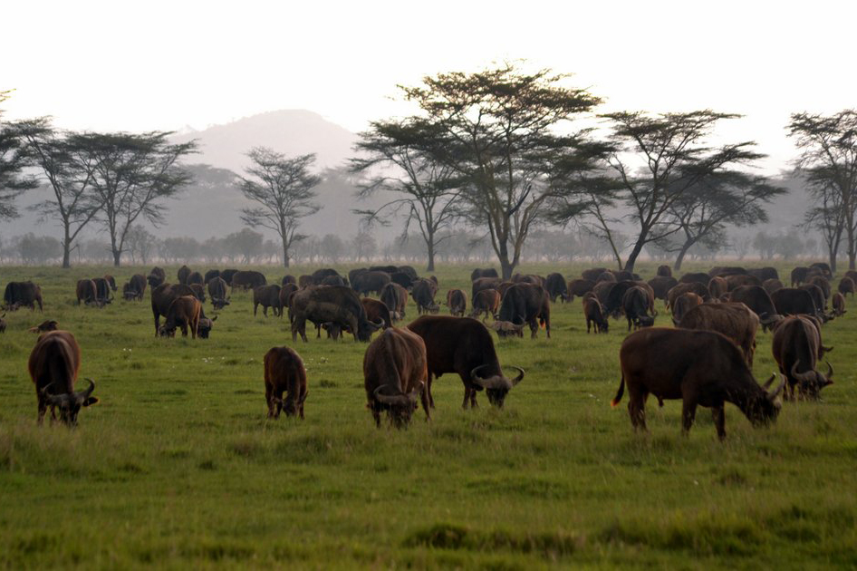 game_herds_at_masaai_mara