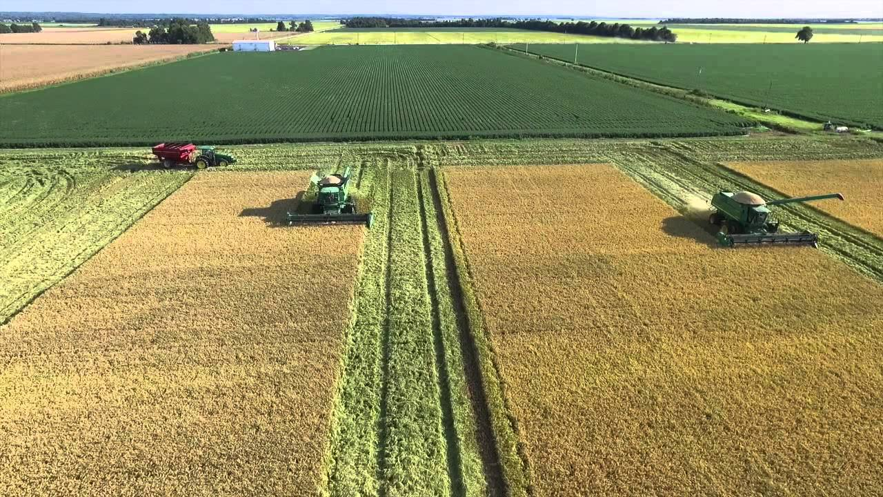 arkansas rice