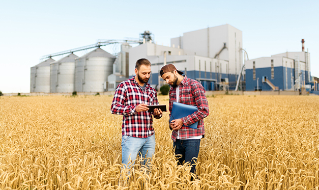Two farmers stand in a wheat field with tablet. Agronomists discuss harvest and crops among ears of wheat with grain terminal elevator on background